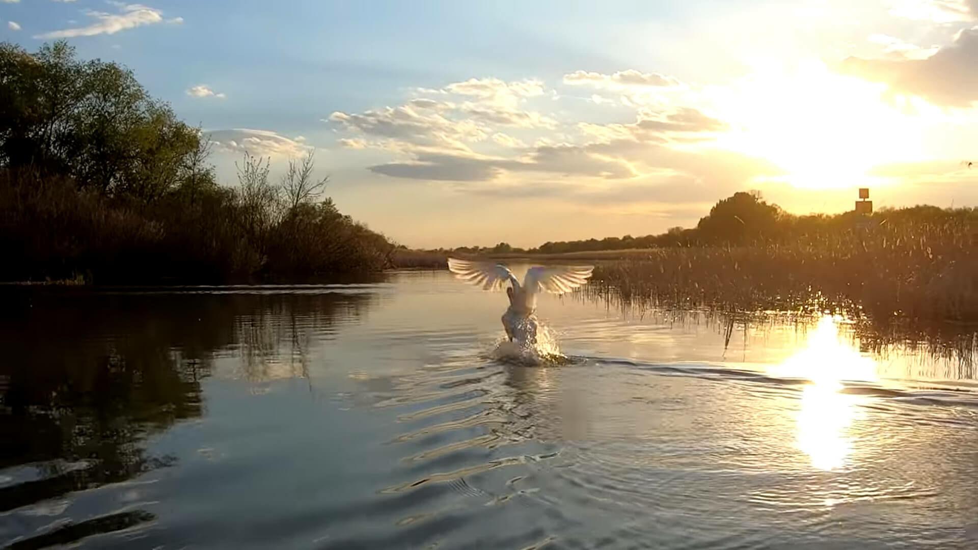A szőke tó - A Tisza-tó hat évszaka - első rész [video]
