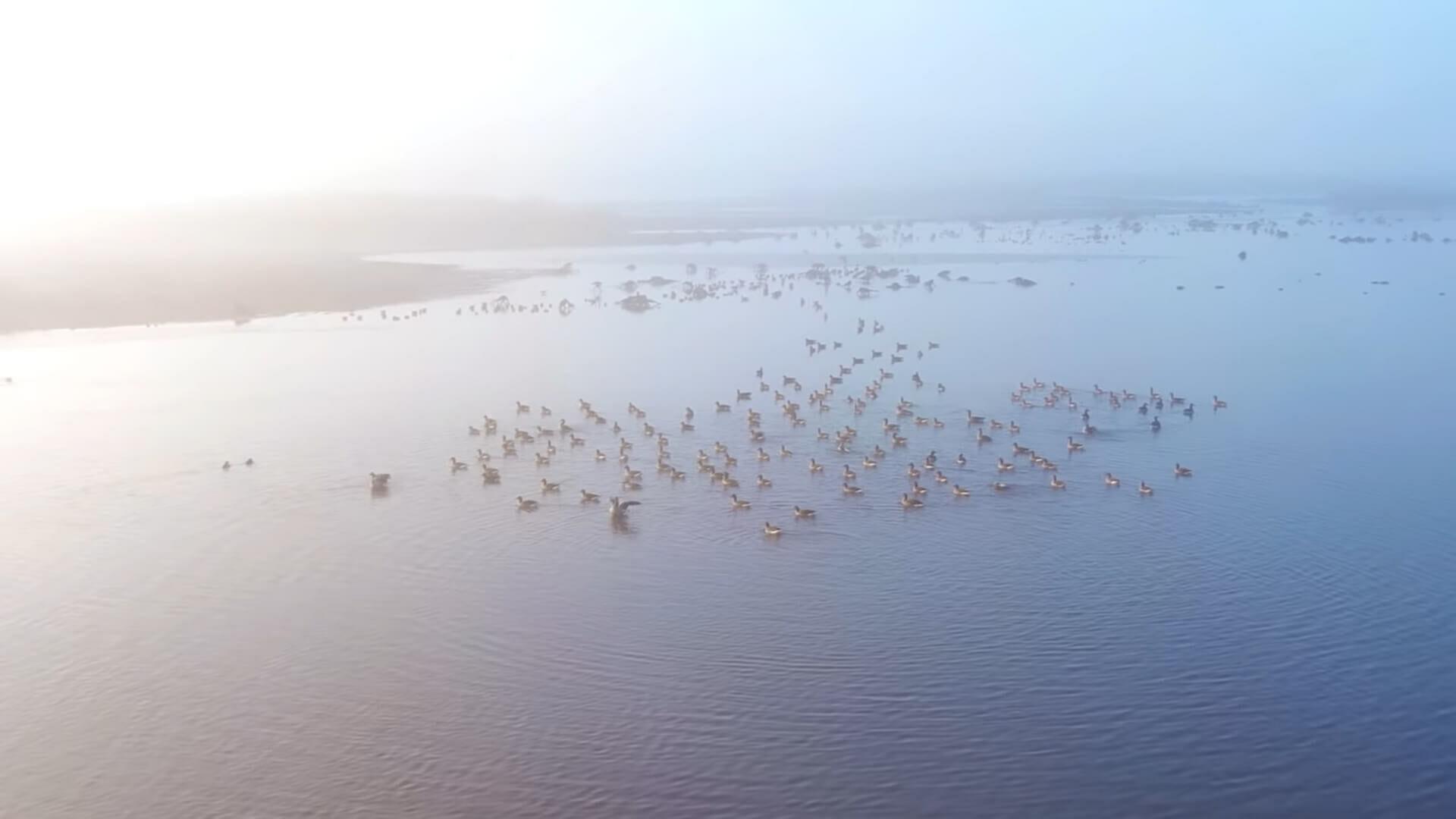 A szőke tó - A Tisza-tó hat évszaka - negyedik rész [video]